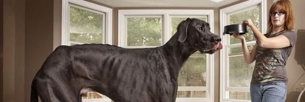 anjing terbesar dunia