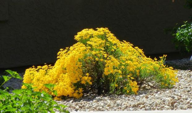 plant palette landscape