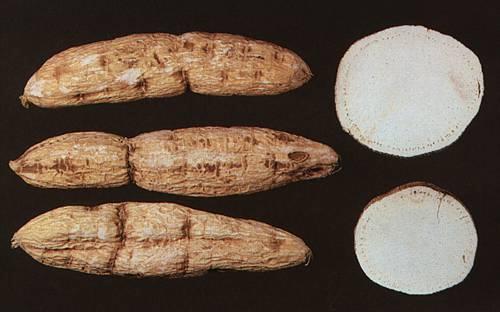 Radix Trichosanthis