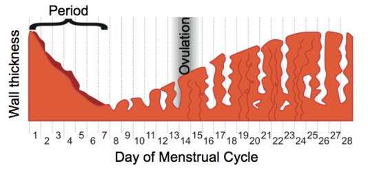 notes on menstrual cycle My cycles period and ovulation staywell health & fitness everyone 26,538 store daily premenstrual notes, menstrual symptoms, medications.