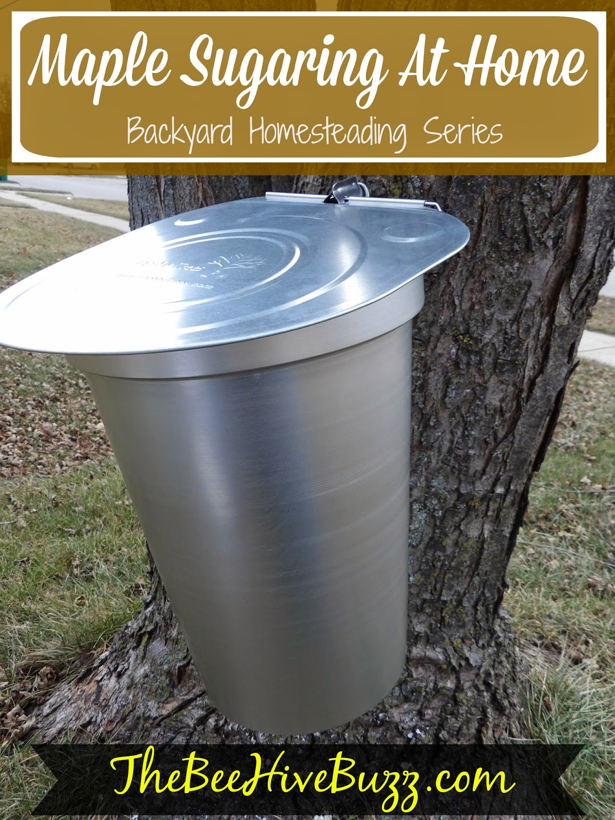the bee hive buzz tapping maple trees making your own maple