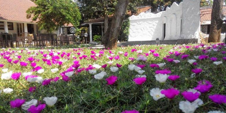 http://tukangtamankaryaalam.blogspot.com/2014/12/pohon-sutra-bombay-tanaman-bunga-sutra.html