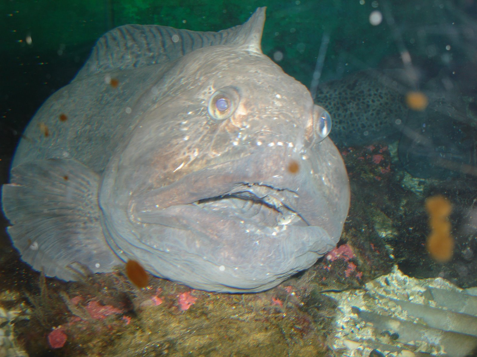Afonso in norway norway is a land of beautiful people and for Ugly fish pictures