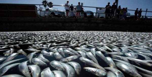 Lingkungan Hidup Dalam Berita Dan Opini Pencemaran
