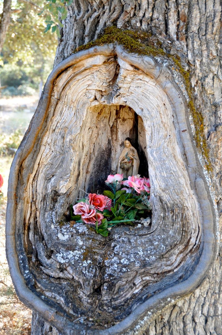 Цветы вагина фото 26 фотография