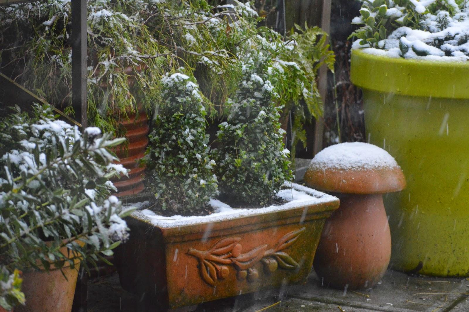 passionn ment jardin mon beau sapin jardin blanc. Black Bedroom Furniture Sets. Home Design Ideas