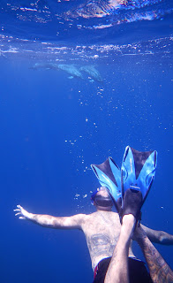 snorkeler with dolphins