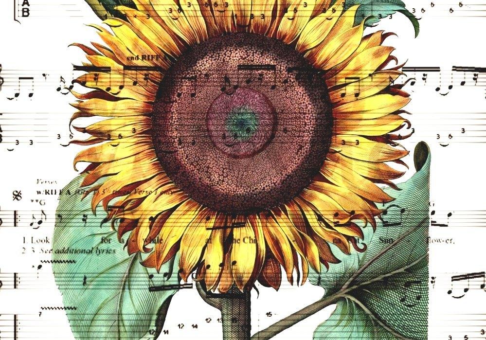 China Cat Sunflower China Cat Lyrics