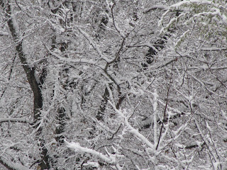Snow on the Feast of the Immaculate Conception