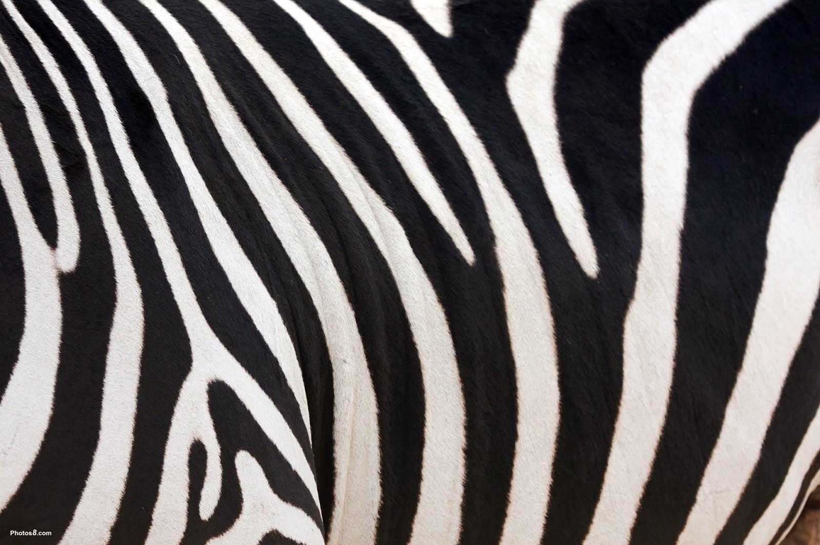 pink zebra print border apps directories