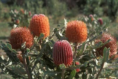 Species diversification in biodiversity hotspots