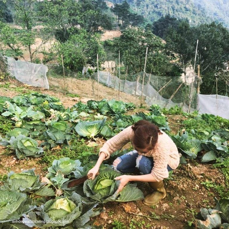 Ca sĩ Hoàng Thùy Linh nô đùa bên vườn rau 6