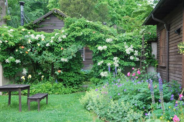 Dr Dan 39 S Garden Tips Vines Are Divine