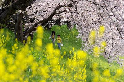 Fotos Paisajes Primavera