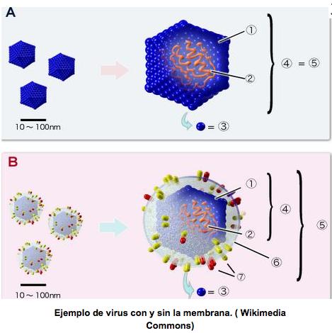 http://www.lagranepoca.com/34445-solo-hay-50-virologos-mexico-enfermedades-aumentan-advierte-unam