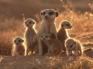 fotos de animales del desierto - FOTOS: Animales del desierto Kalahari DeNunCianDo