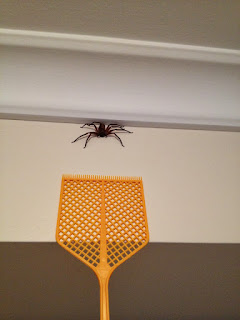 how to catch a huntsman