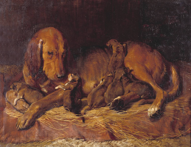 Bloodhound and pups by Charles Landseer