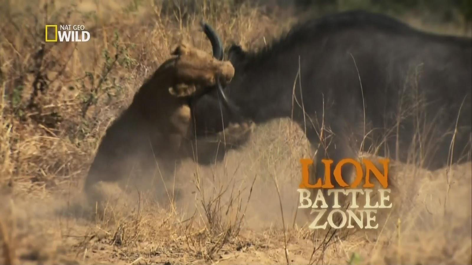 Guerra de Leões