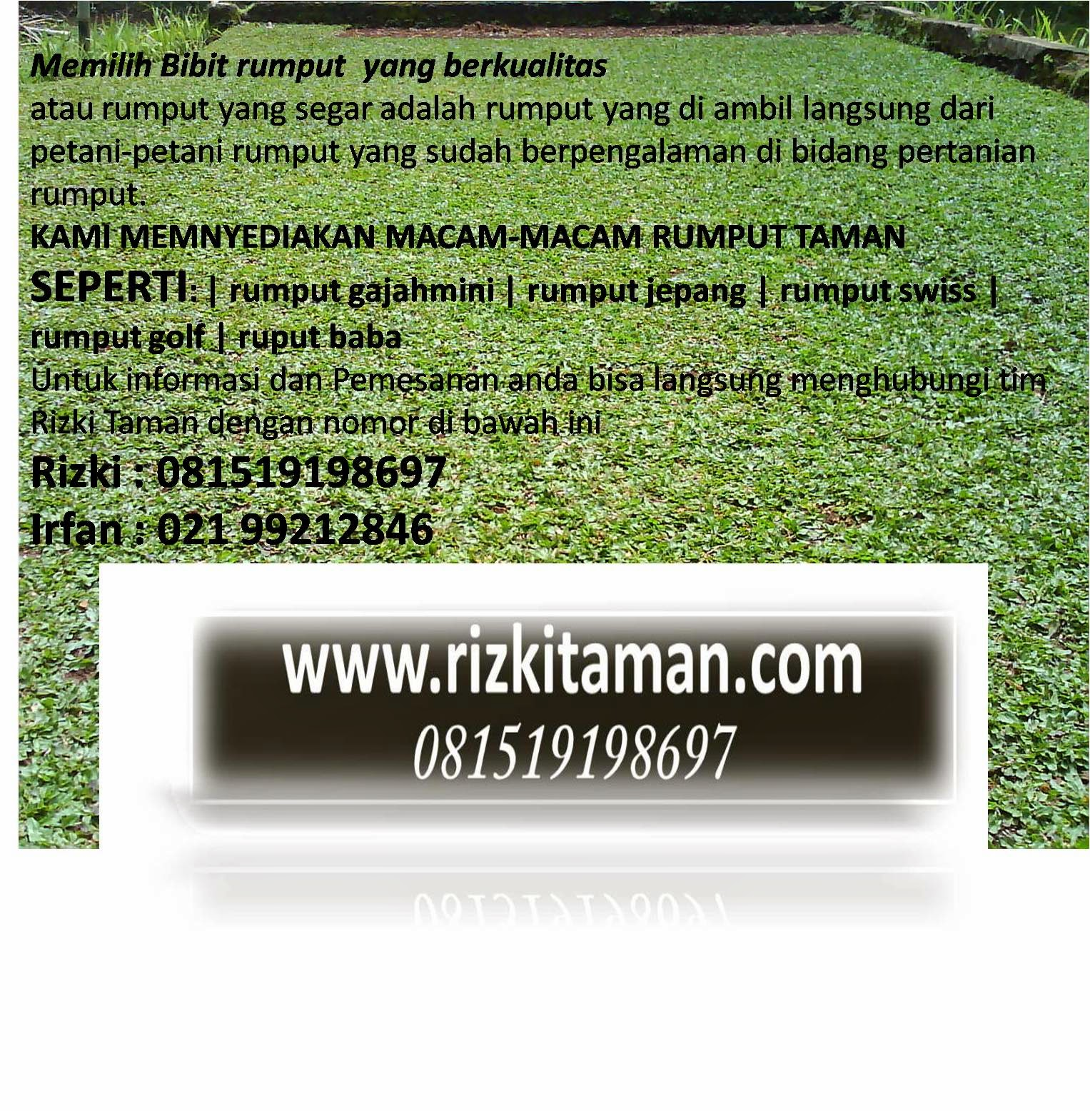 Tukang rumput gajahmini | jasa tanam rumput dan pembuatan taman minimalis