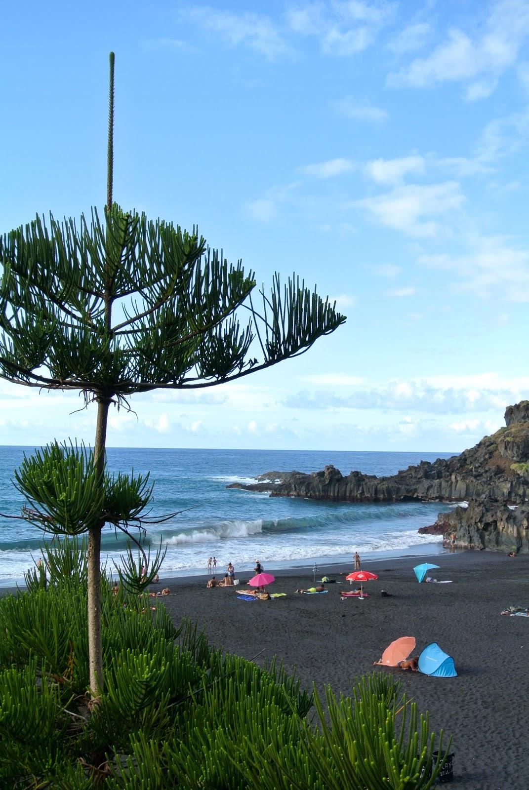 Piante Mediterranee Selvatiche : Ultimissime dall orto tenerife playa bollullo e la