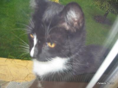 la-fereastra-cu-pisici-4