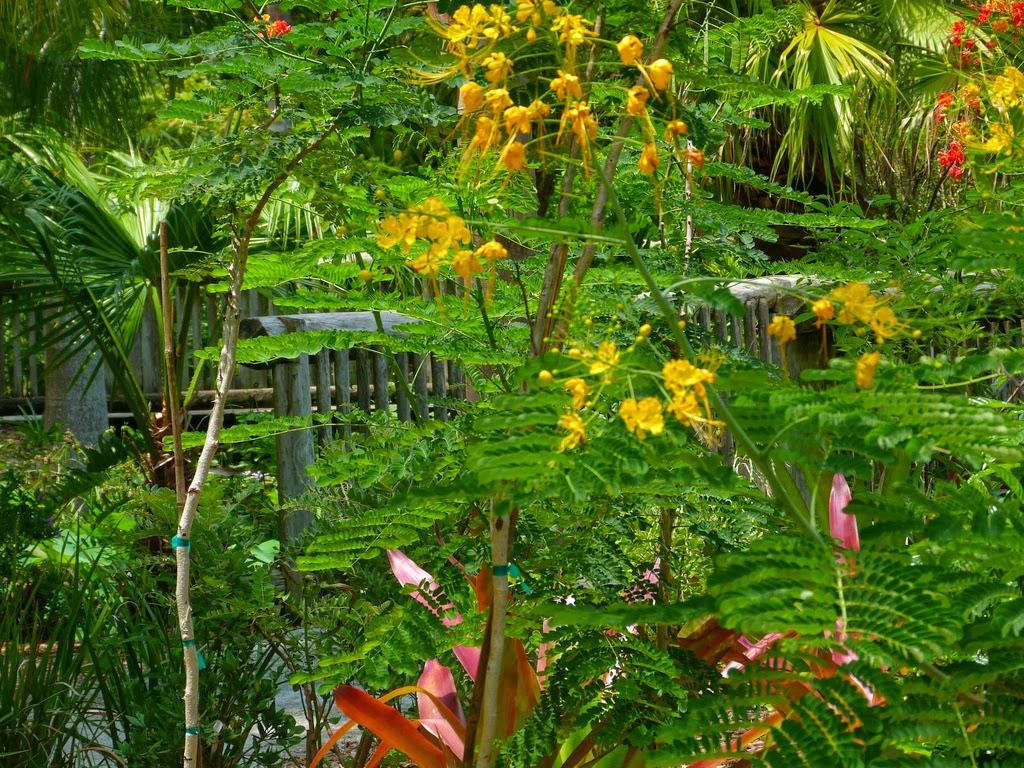 McKee Botanical Gardens Lush Garden Scene