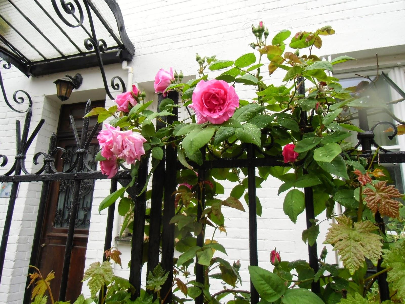 La rte le p re d 39 ulysse la cite florale paris for Plante ulysse
