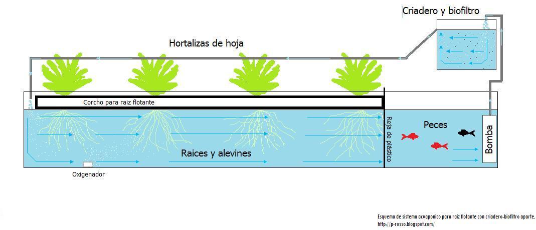Diario de un granjero de ciudad acuaponia ejemplo de for Como criar peces en casa para consumo
