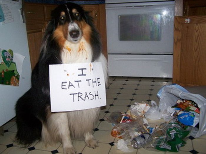 When Dogs Get Diarrhea