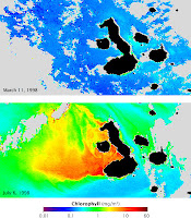 Satellite Maps showing underwater changes before and after El Nino in Galapagos Islands