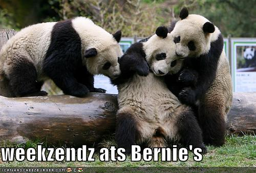 Panda bear funny - photo#18