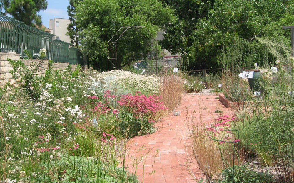 Designing Your New California Garden: 9 Managing Water – Part 2