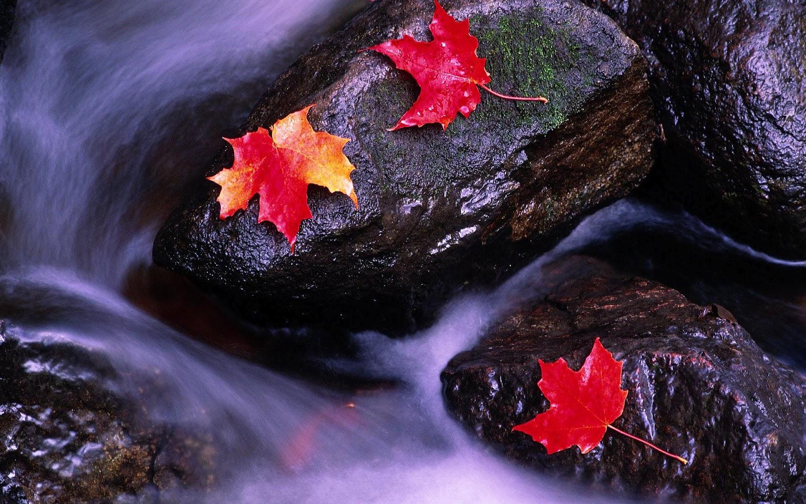 http://1.bp.blogspot.com/-c8lrVkZDdys/UCAcFB1lH0I/AAAAAAAAEb4/fVU0I6wrwmA/s1600/hd-herfst-wallpaper-met-herfstbladeren-op-rotsen-en-water-herfst-achtergrond.jpg