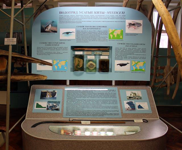 Экспозиция «Киты и китобойный промысел»