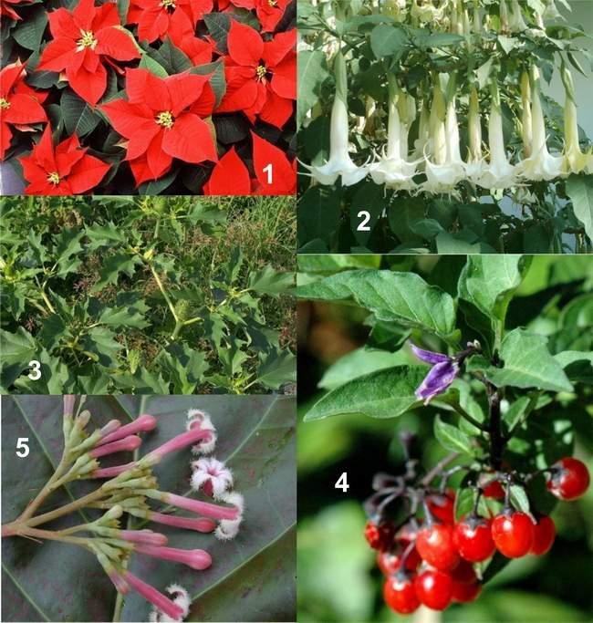plantas brasileiras jardim:plantas que são muito venosas