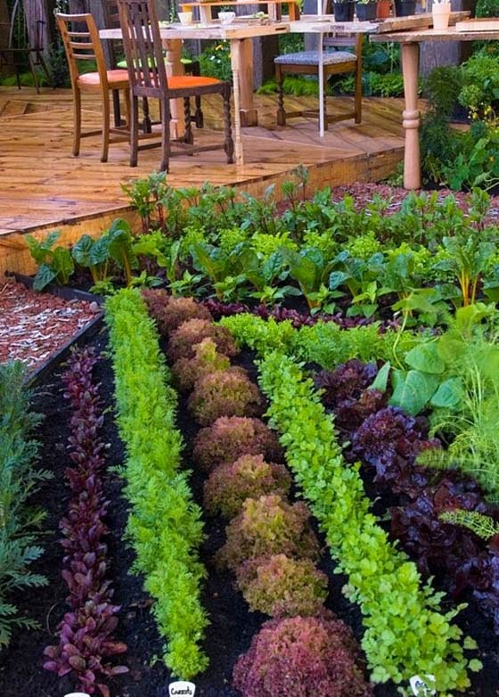 Vegetable garden plans for beginners ayanahouse for Garden designs for beginners