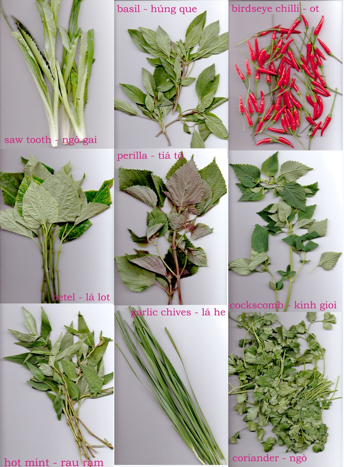 Basic Vietnamese Herbs In My Kitchen Chilli Uyen Luu