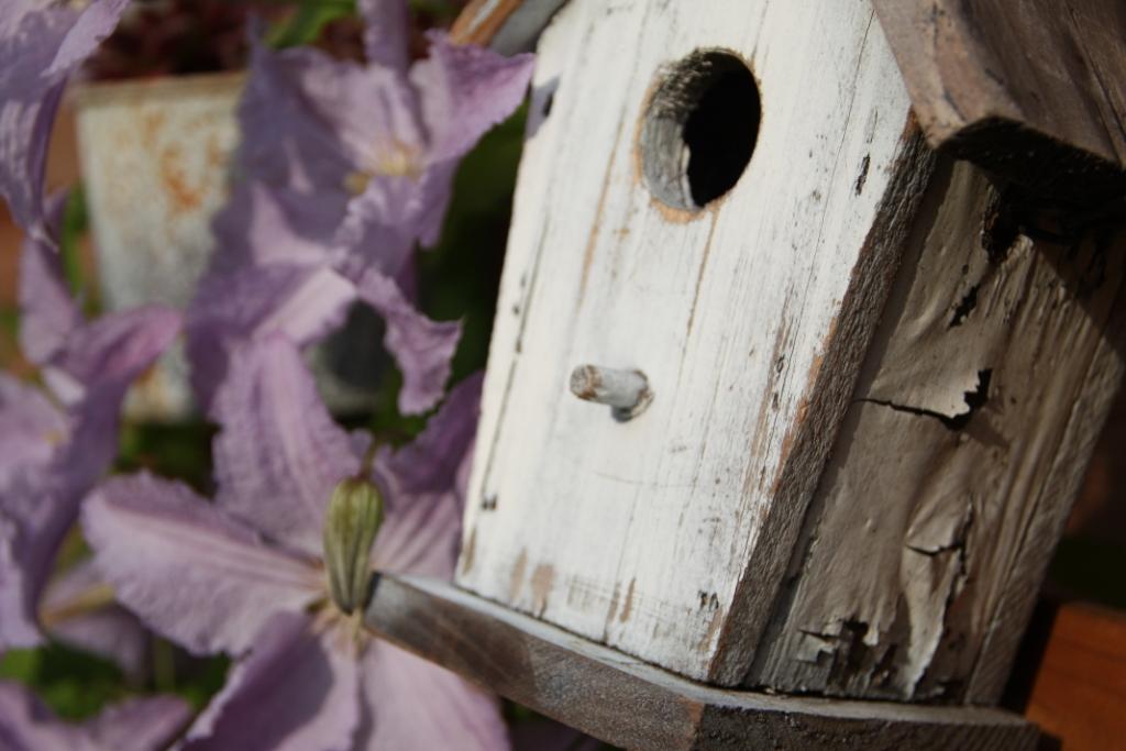 teacup in the garden die clematis aus der stadt. Black Bedroom Furniture Sets. Home Design Ideas