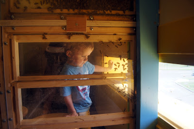 Long_Island_Childrens_Museum_bees