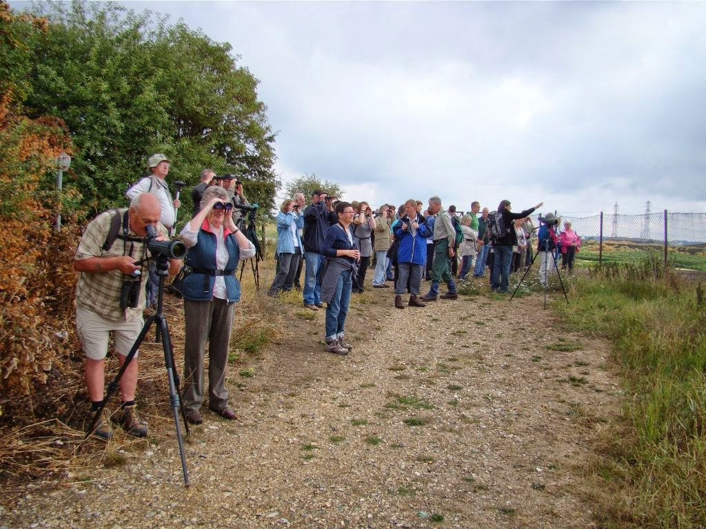 Non stop birding independent mini conservation ngos