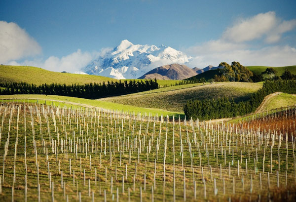 New Zealand Wine Review Video