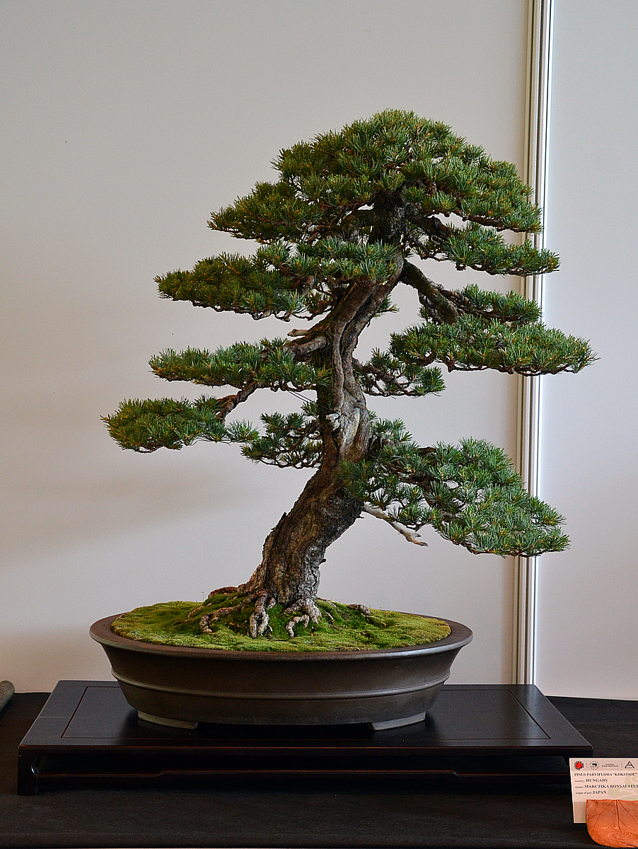 Bonsai Living Art May 2012