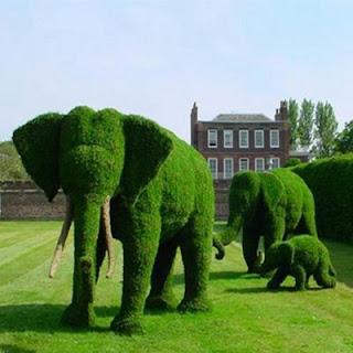 Elefántok a kertben