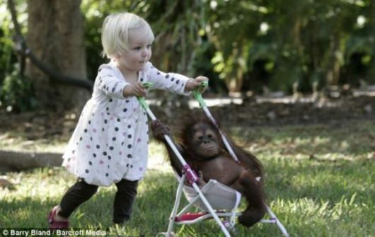 The baby orangutan and a little girl