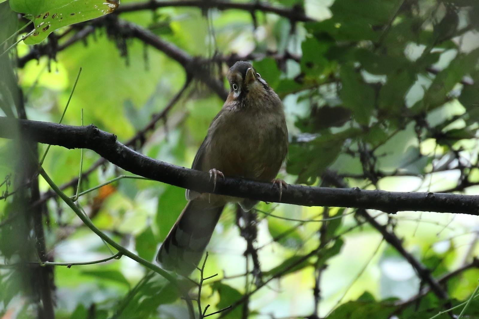 China Bird Tour