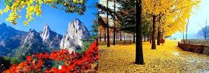 Pegunungan Sorak dan Nami Island