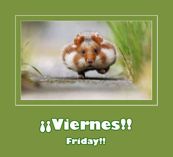 cute-hamster-running