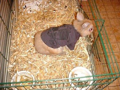 Todo sobre conejos una oreja arriba y otra abajo d - Casas para conejos enanos ...