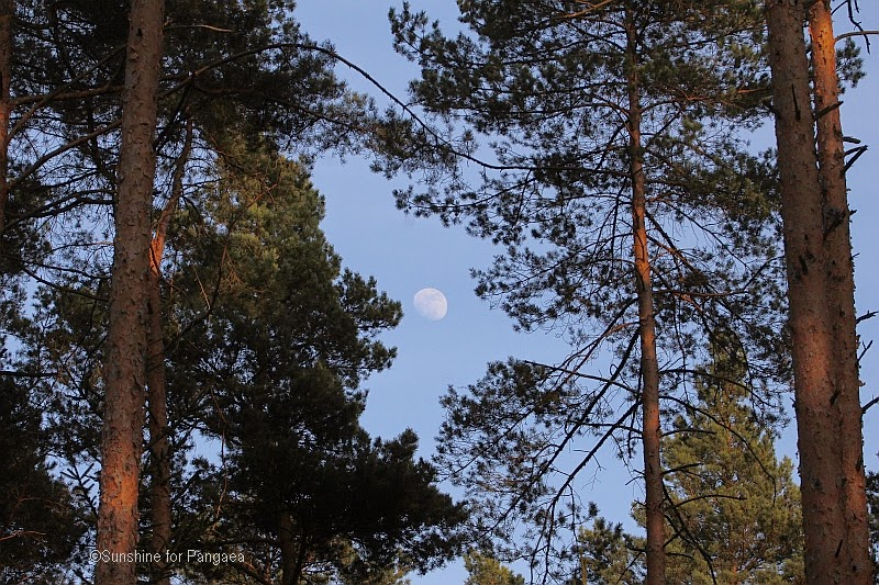 Moon in the forest